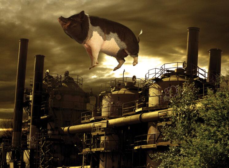 KZOK Annual Calendar, Pink Floyd, Animals