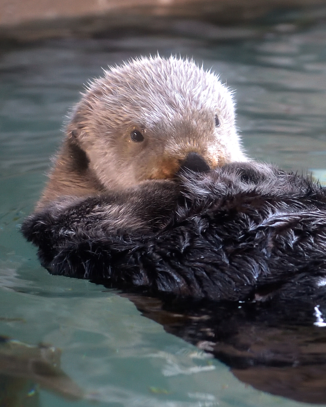 Seattle Aquarium, Splash! (fund-raiser)