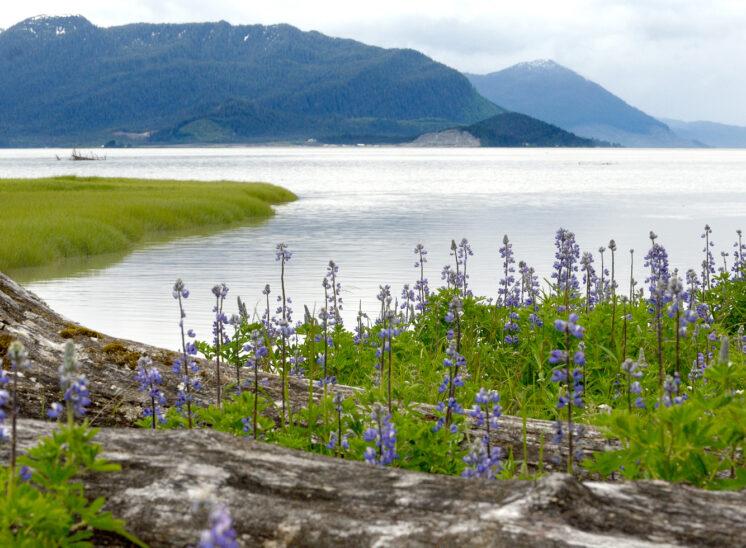 Scenic Alaska waterway