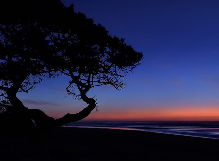 Sunset quietude at Cannon Beach on the Oregon Coast with a Madrone tree silhouette. Jerry and Lois Photography