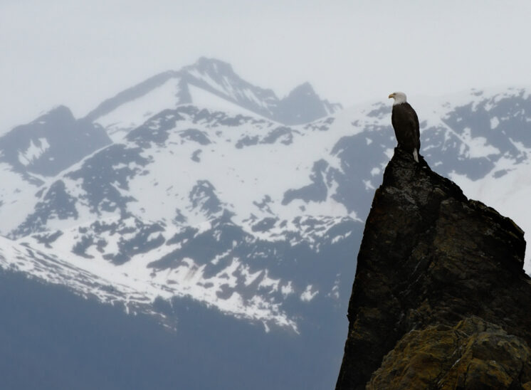 Bald Eagle against snow-capped mountain