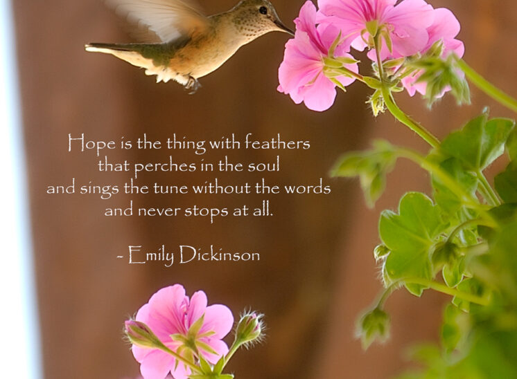 A delicate moment with a hummingbird. © Jerry and Lois Photography, all rights reserved
