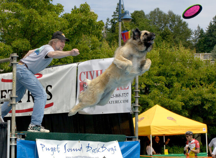 Dock Dogs: Ariel, a Leonberger Mountain Dog launches towards her flying disk while competing for a distance jump. © Jerry and Lois Photography, all rights reserved